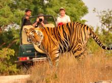 wildlife_safari