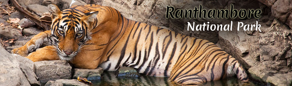 Jungle Adventure with Wildlife Tours in India