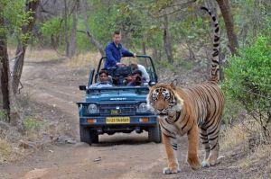 Experience Adventure in Ranthambore Rajasthan