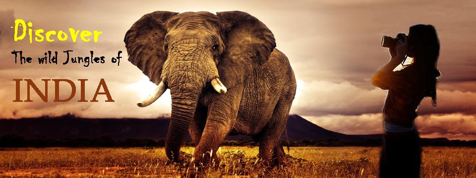 Discover Adventure Travel in Wild Jungles of India