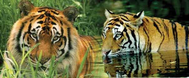 Top 10 wildlife tour destinations in North India