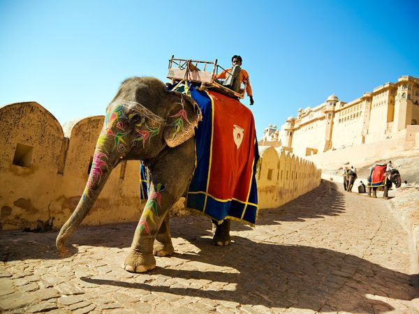 Experience Royal Rajasthan with Amber Fort Elephant Ride