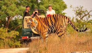 Adventure Tourism and Jungle Safari in India