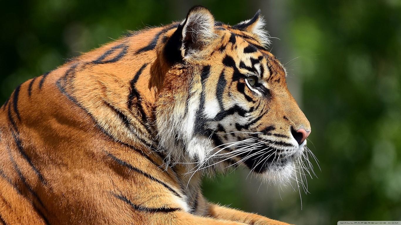 1N/2D Trip for Madhai wildlife experience