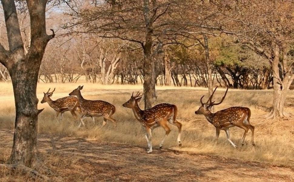 Jaisalmer National Desert park