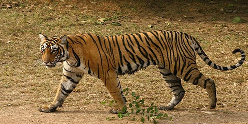 Delhi - Jaipur - Ranthambore - Delhi