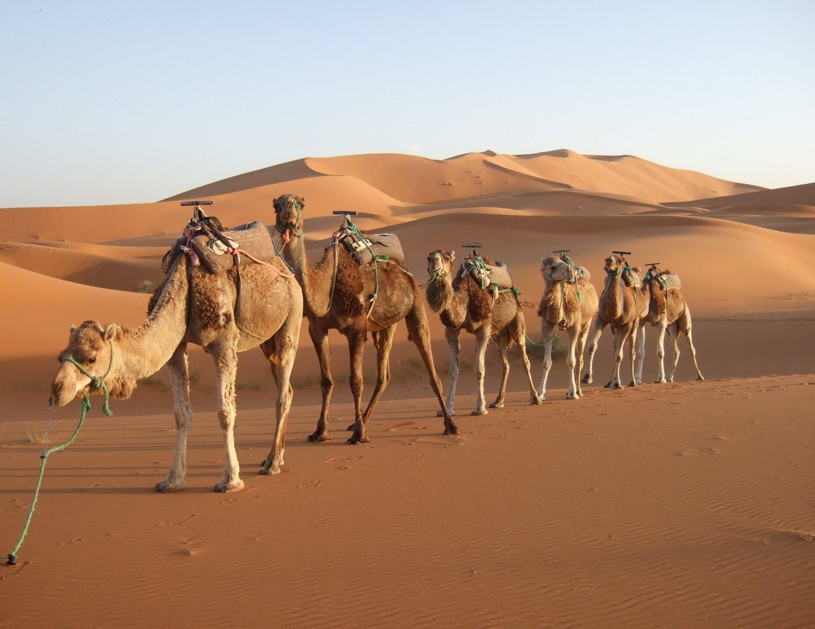Royal Rajasthan Travel Package