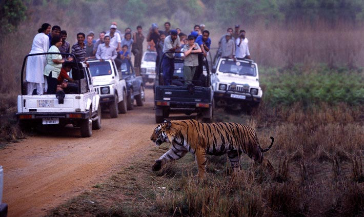 3 Days Private Ranthambore Tour