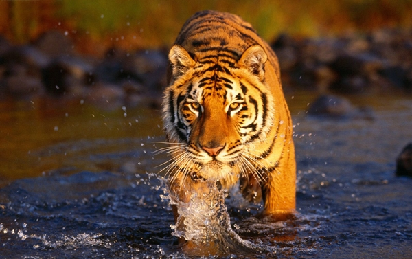 Delhi - Ranthambhor National Park - Delhi