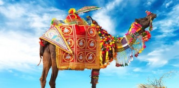 Everything You Need to Know About Pushkar Fair Festival