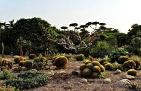 Cactus Garden Chandigarh