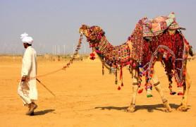 Thar Camel Safari Bikaner