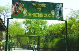 ChattBir Zoo Chandigarh