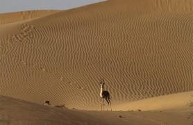 Desert Nation Park Jaisalmer