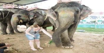 Rajasthan Elephant Safari