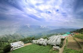 About Fagu Himachal