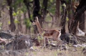 Gajner Wildlife Sanctuary Bikaner
