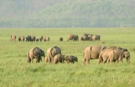 About Rajaji National Park Uttrakhand