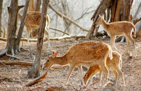 Wildlife Sanctuary Mount Abu