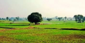 Punjab Farms Images
