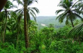 Thonikadavu - Day Tours, Kerala