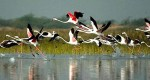 Golden Triangle With Birds in Bharatpur