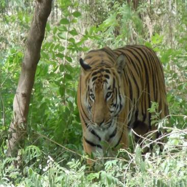 Delhi Jim Corbett Agra Jaipur Tour