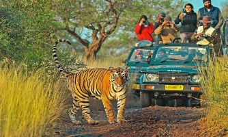 Best of Rajasthan Wildlife with Golden Triangle Tour