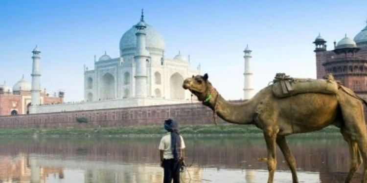 Indian Tiger Golden Triangle Tour