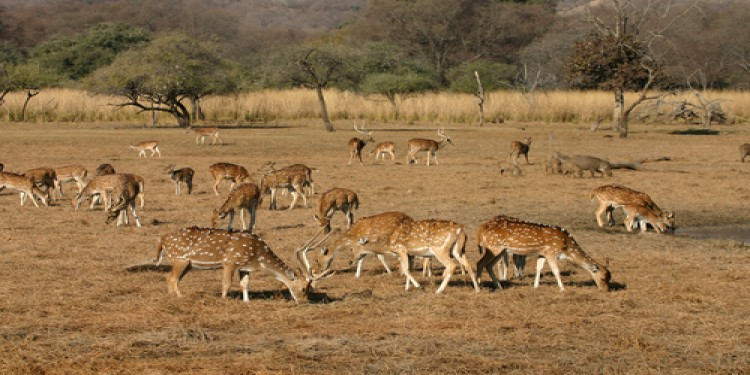 Delhi Agra Jaipur Sariska National Park Tour Package