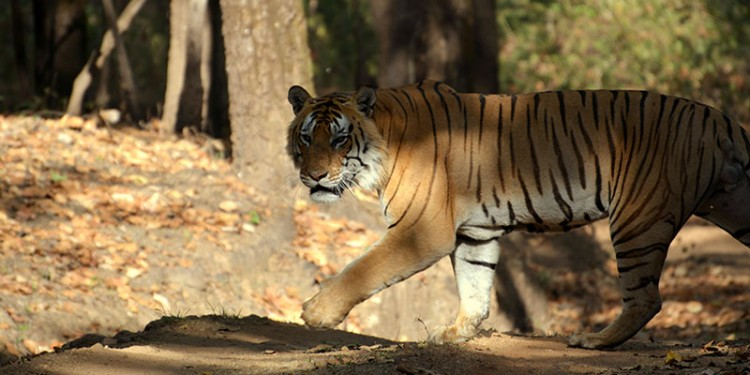 Jaipur Ranthambore Excursion