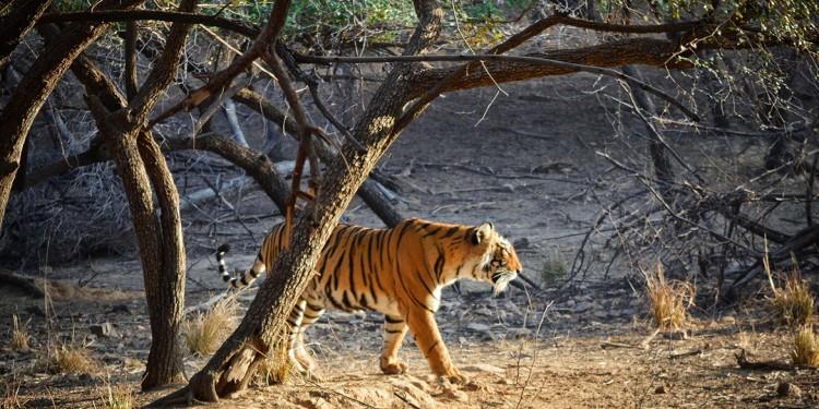 Tiger Bird Wildlife Tour