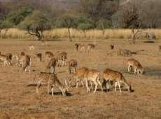 Delhi Agra Jaipur Sariska National Park Tour Package