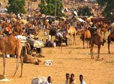 Pushkar Fair With Taj Mahal Tour