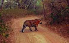 3 Days Corbett Tour From Delhi