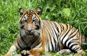 India Wildlife Santuaries and National Park Tours